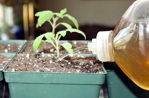 Picture of Panchagavya Liquid Fertilizer 250 Ml