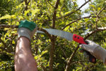 Picture of Pruning Chromium Karavti 12 Inch Hand Saw 3 Edge Sharpen Teeth with Plastic Cover (Multicolor)
